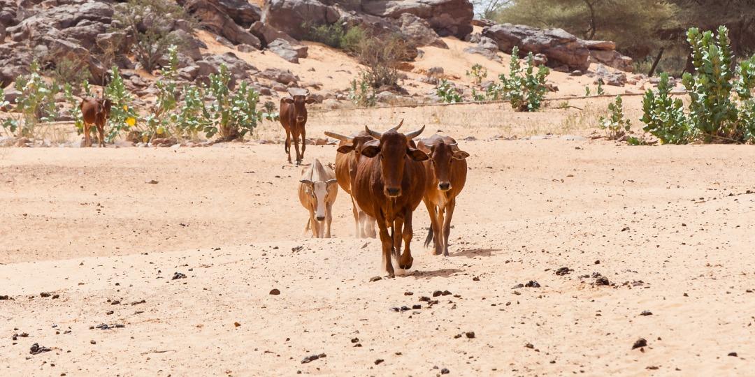Mauritania-20181110130658-copia.JPG